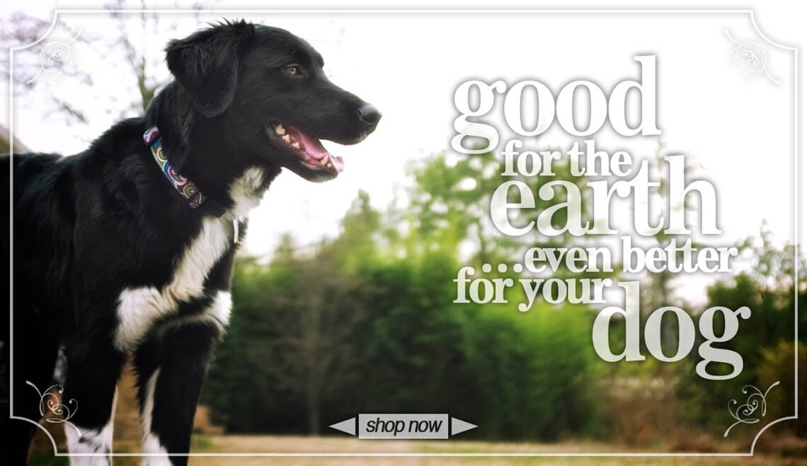 Good for the earth, even better for your dog.  Australian Shepard in a hemp dog collar.