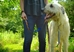 earthdog hemp leash with irish wolfhound