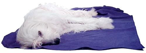 earthdog pack member jewel resting on eco friendly hemp recycled fleece dog blanket in blueberry