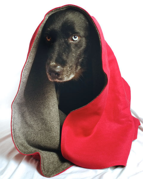 Black dog named Slater wrapped in our pomegranate hemp blanket