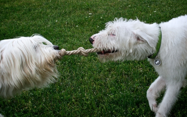 earthdog crew members jewel flanagan playing tug of war eco friendly hemp rope dog toy