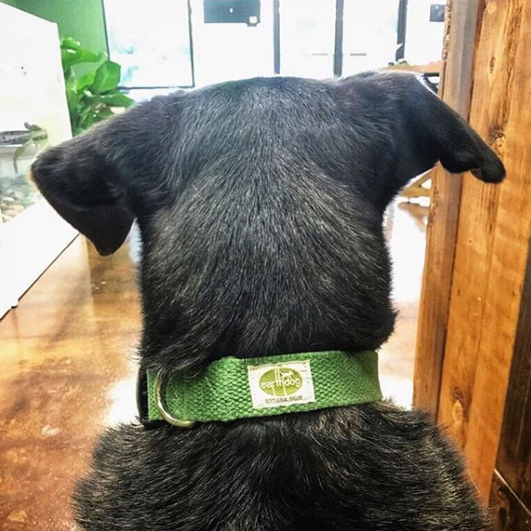 solid hemp adjustable collars - ed-2shc